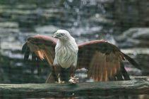 TripLovers_Malaysia_KL_155_KL-Bird-Park