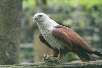 TripLovers_Malaysia_KL_157_KL-Bird-Park