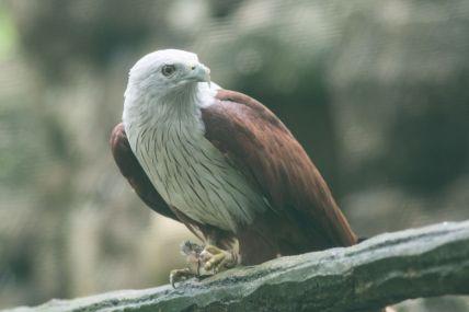 TripLovers_Malaysia_KL_162_KL-Bird-Park