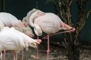 TripLovers_Malaysia_KL_173_KL-Bird-Park