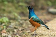 TripLovers_Malaysia_KL_178_KL-Bird-Park