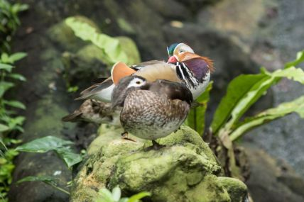 TripLovers_Malaysia_KL_179_KL-Bird-Park