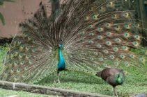 TripLovers_Malaysia_KL_186_KL-Bird-Park