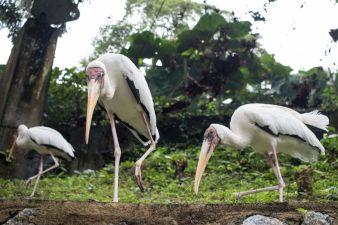 TripLovers_Malaysia_KL_197_KL-Bird-Park