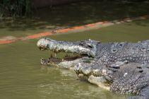 TripLovers_Malaysia_KotaKinabalu_185_TuaranCrocodileFarm