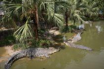 TripLovers_Malaysia_KotaKinabalu_234_TuaranCrocodileFarm