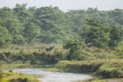 TripLovers_Chitwan_015