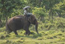 TripLovers_Chitwan_018