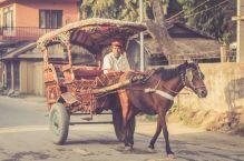 TripLovers_Chitwan_033