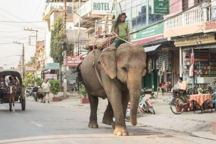 TripLovers_Chitwan_035