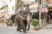 TripLovers_Chitwan_036