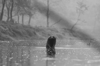 TripLovers_Chitwan_060