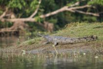 TripLovers_Chitwan_071