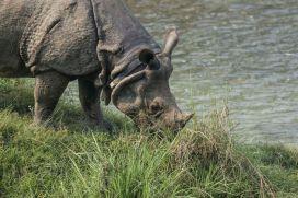 TripLovers_Chitwan_109