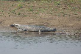 TripLovers_Chitwan_114