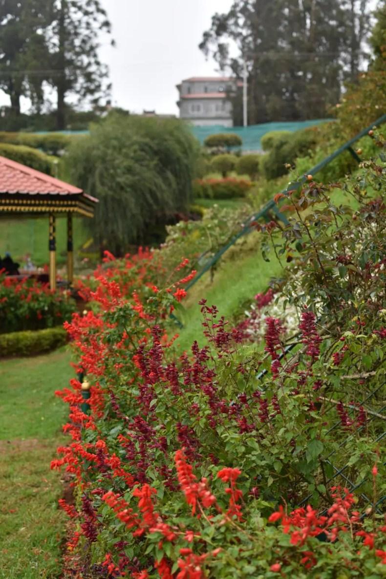 Rose Garden Ooty 13
