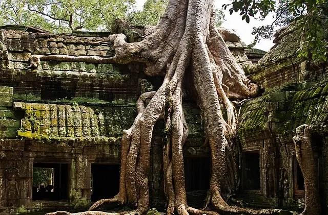 Ta prohm, Angkor wat, Siem Reap