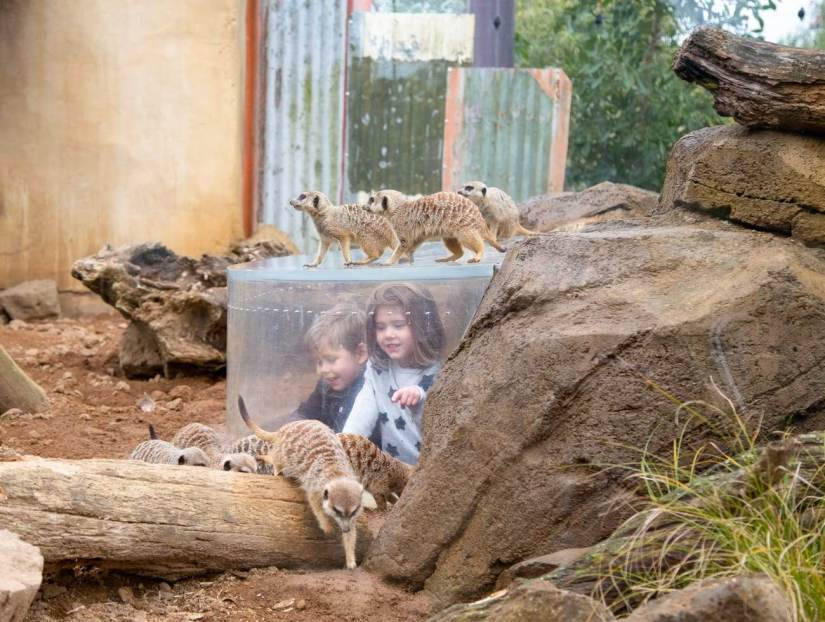 Auckland Zoo with kids