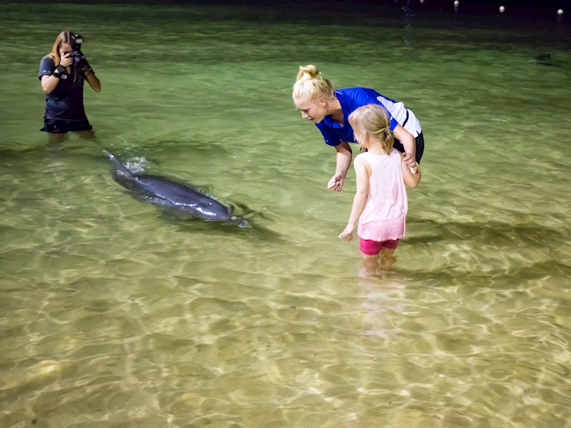 kids play with dolphin in Tangalooma