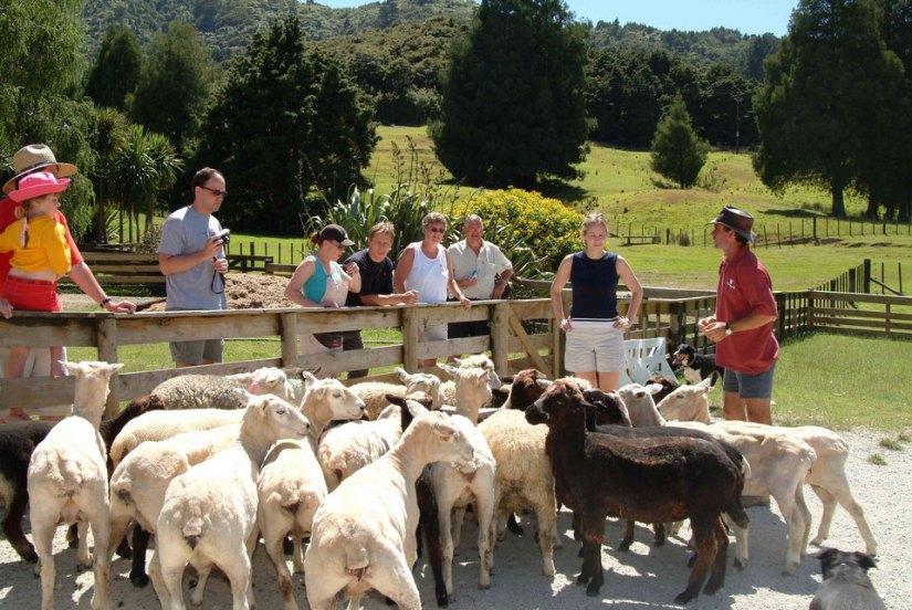 SheepWorld New Zealand