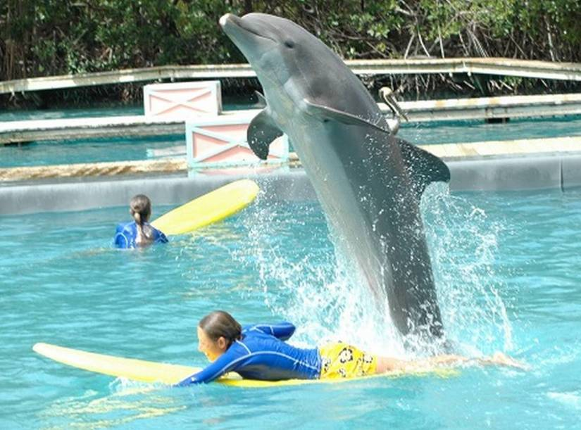 swimming with dolphin at Miami Seaquarium
