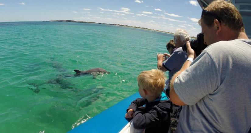 father and kids watch dolphins in Perth