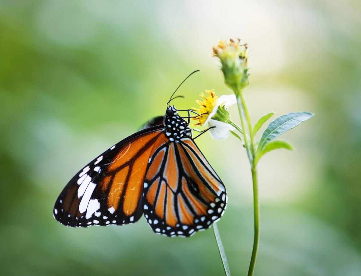 best butterfly garden in india