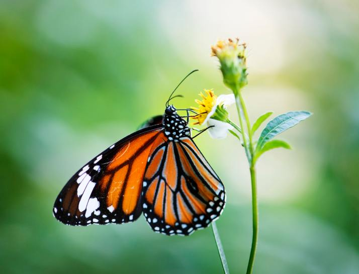 best butterfly garden in india
