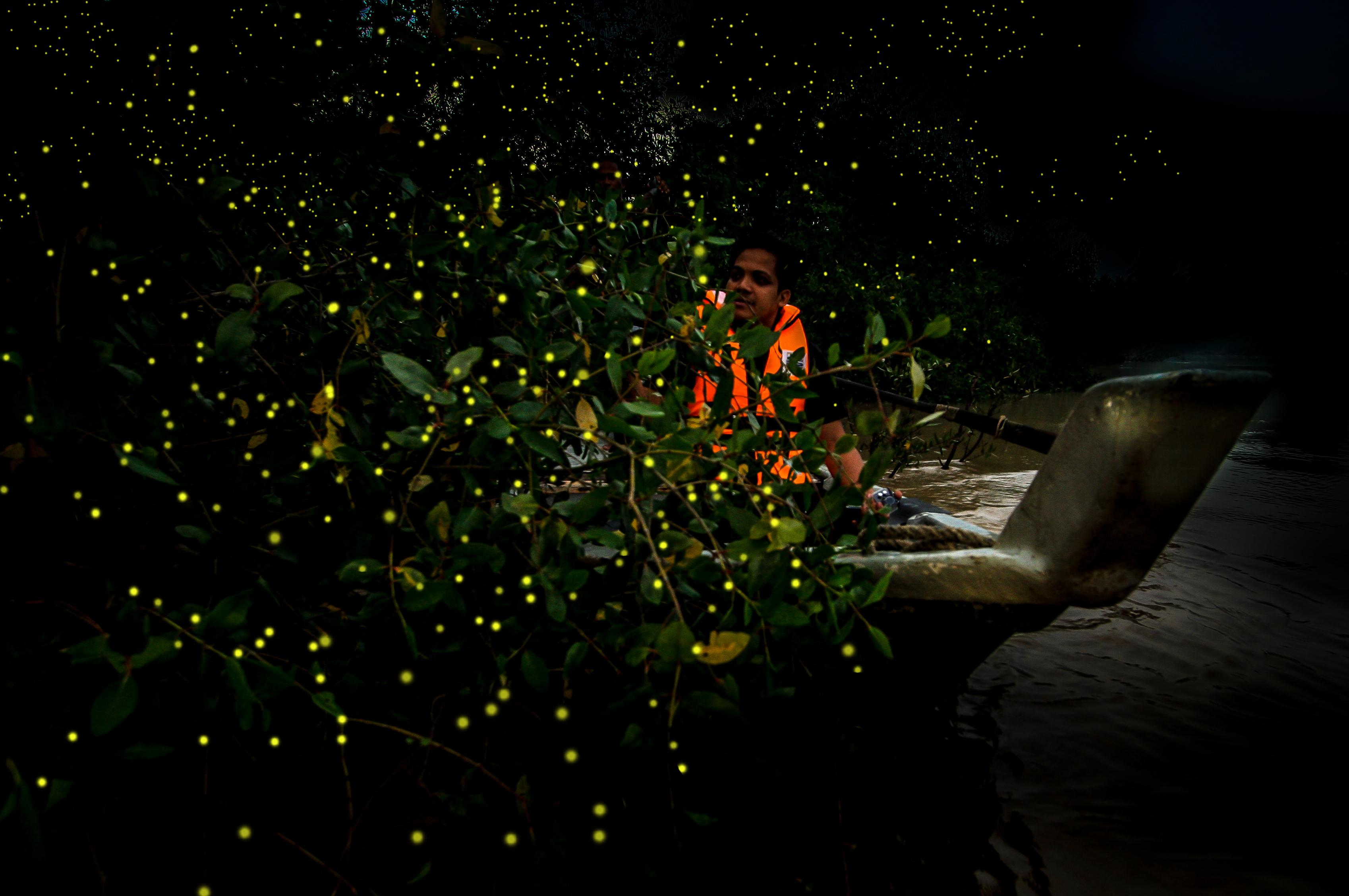 place to watch fireflies