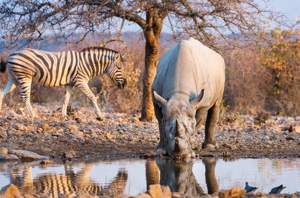 Ongava Park, Namibia