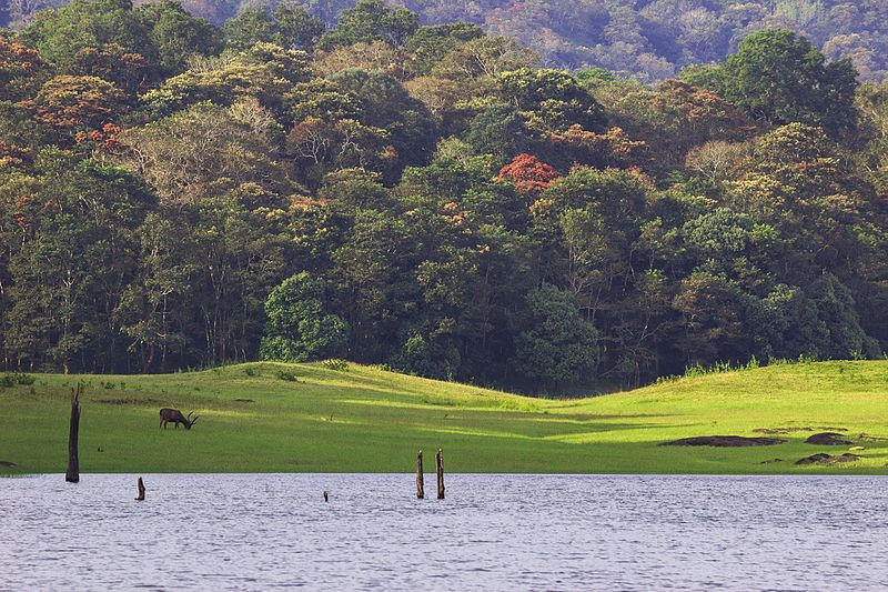 Periyar National Park Places To Visit In September