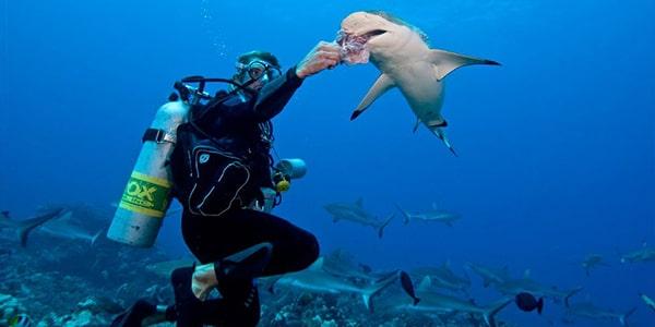 Feeding Sharks/Stingrays