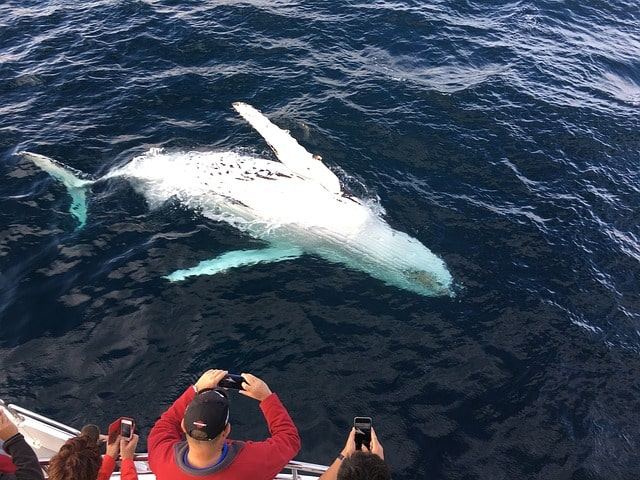 Go Whale Watching at Ile Sainte Marie things to do in Madagascar
