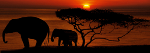 20 Famous African Animals and Where to See Them in Africa