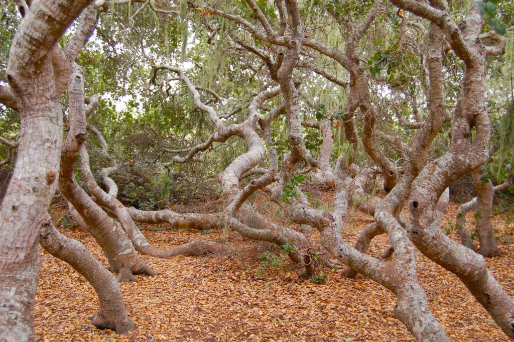 El Moro Elfin Forest: things to do in morro bay