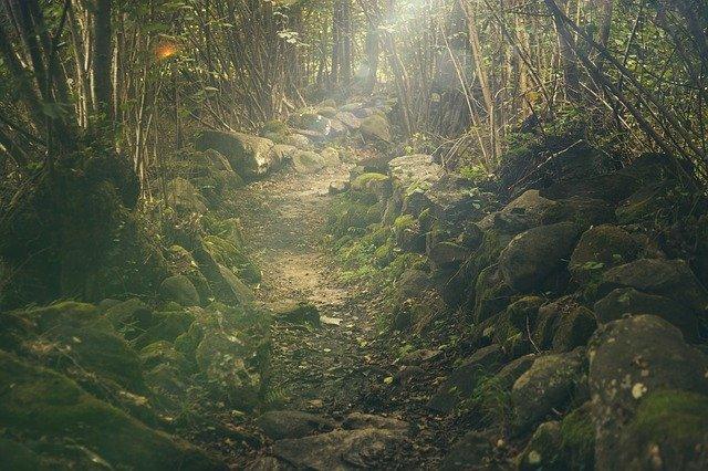 Phi Phi Islands: trekking in the jungle