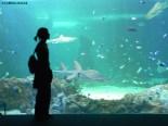 Sydney_Aquarium
