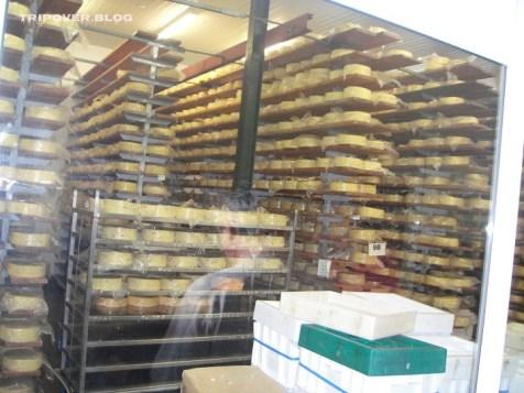 visit Ashgrove Tasmanian Farm - smelly, but superb cheese