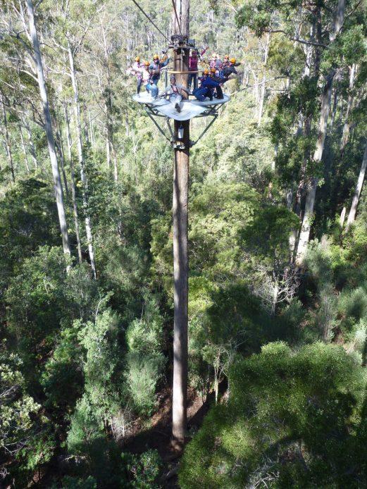 Tasmania Things to Do - go to Hollybank Treetops