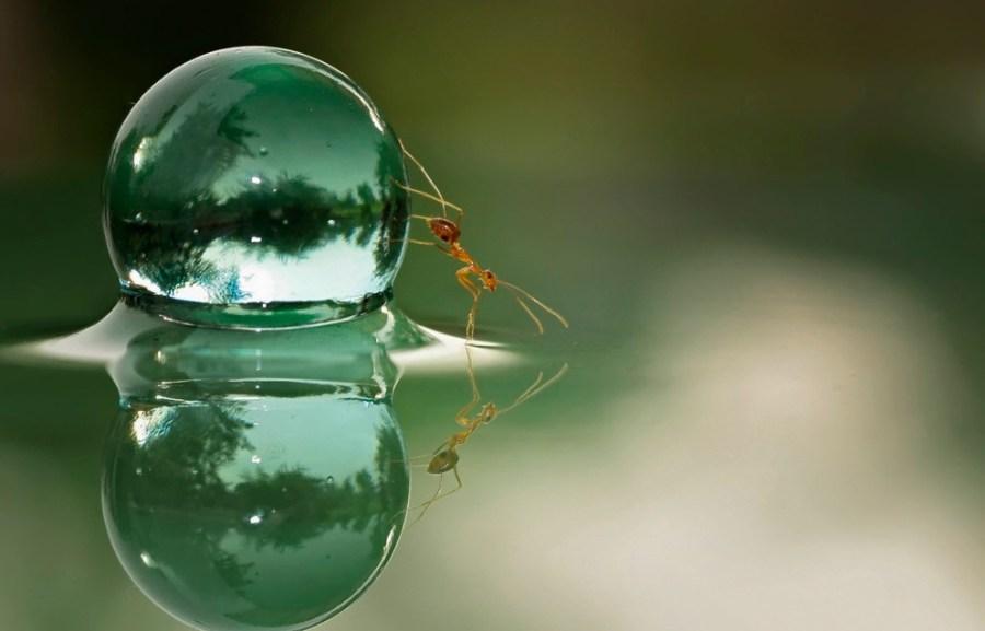 Water-Globe