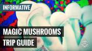 Magic Mushrooms Trip Guide