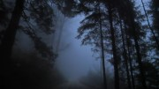 Noj Dot Forest