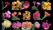 Trippy Cacti in Bloom