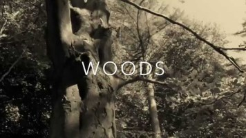 Woods by HozyBoy