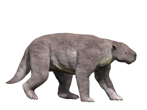 Pantodont