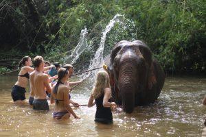 Olifant wassen - Mondulkiri project