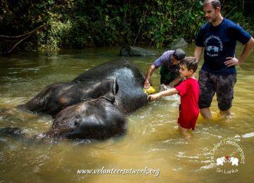 Elephant washing at the Elephant Freedom Project, Sri Lanka