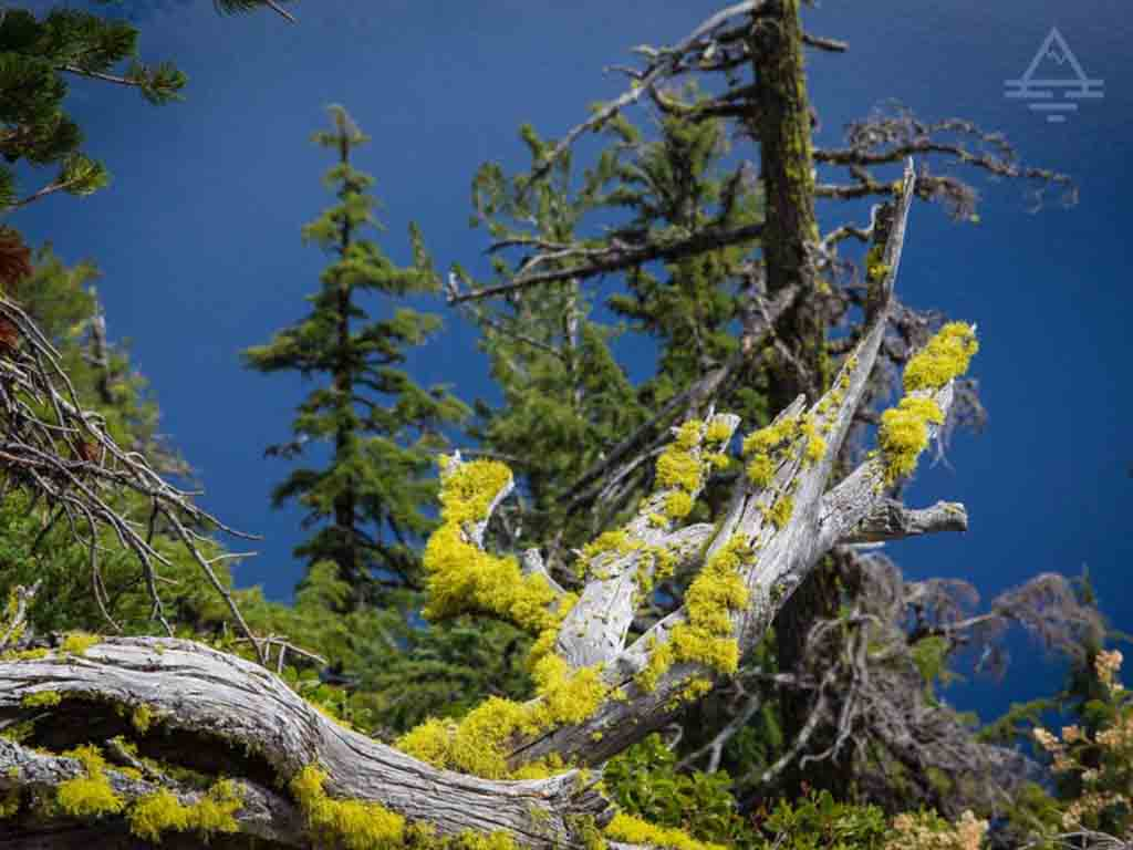 Crater Lake blue and green moss.