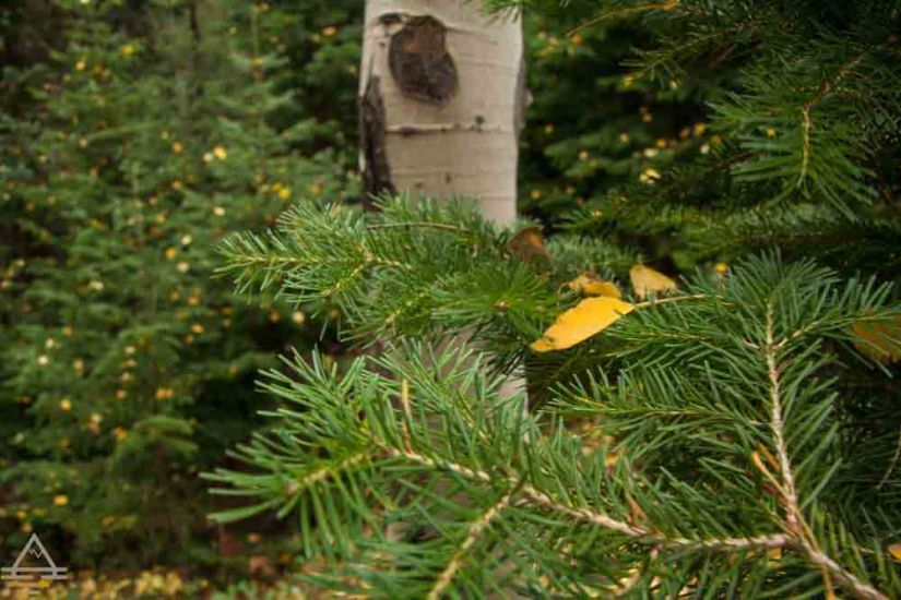 rocky-mountain-national-park-leaf2-trip
