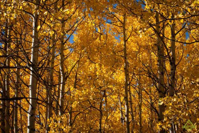 rocky-mountain-national-park-leaves3-trip